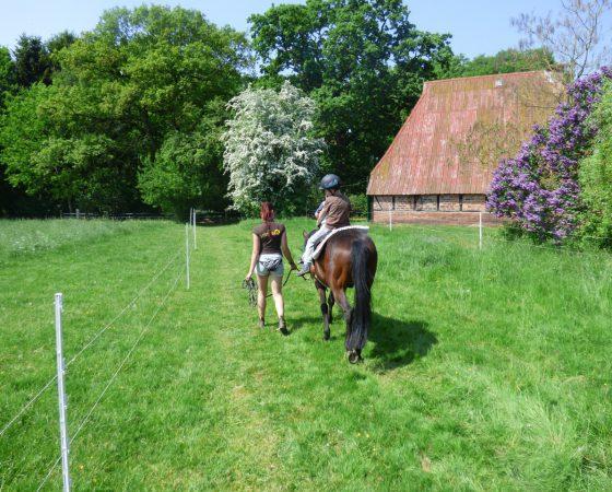 Schenke Kindern Zeit mit Pferden