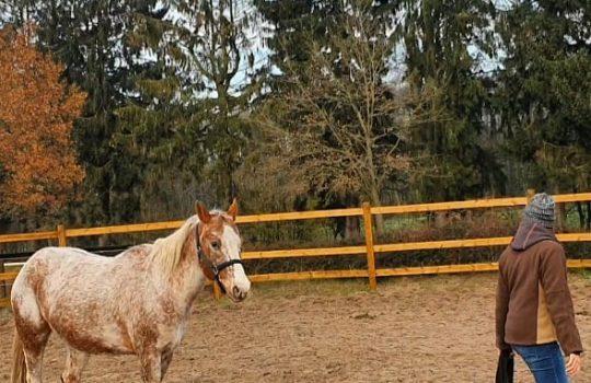 Weiterbildung zur Pferdeverhaltenstherapeutin bei Pferde-Stärken von Julia Neßler